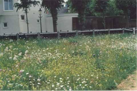 De bloemenweide. Klik hier voor een foto van groter formaat.